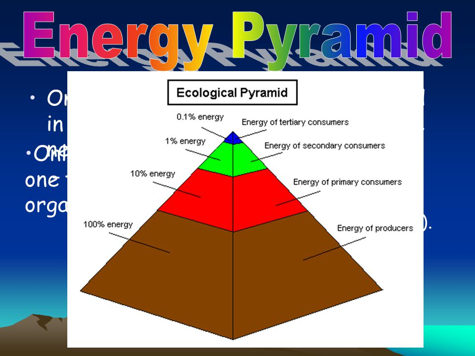 Energy Pyramid Only part of the energy that is stored in one trophic level is passed on to the next level…. why