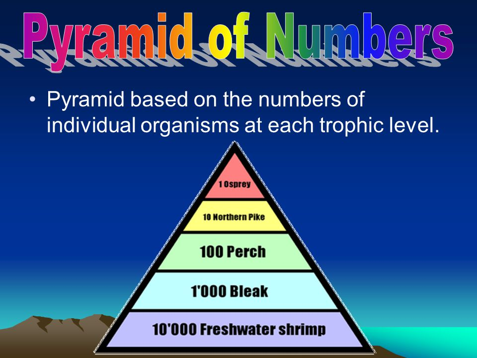 Pyramid of Numbers Pyramid based on the numbers of individual organisms at each trophic level.