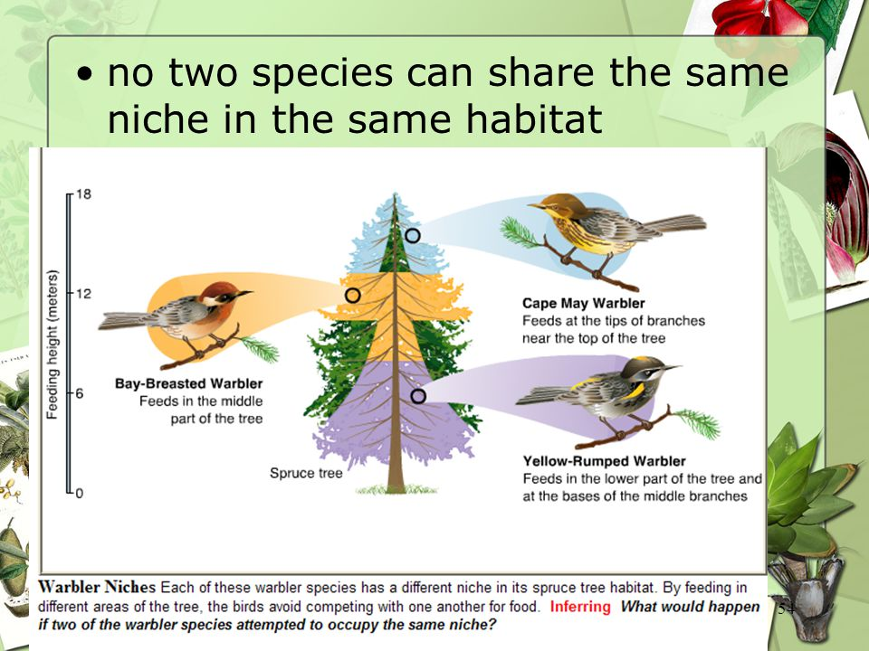 no two species can share the same niche in the same habitat