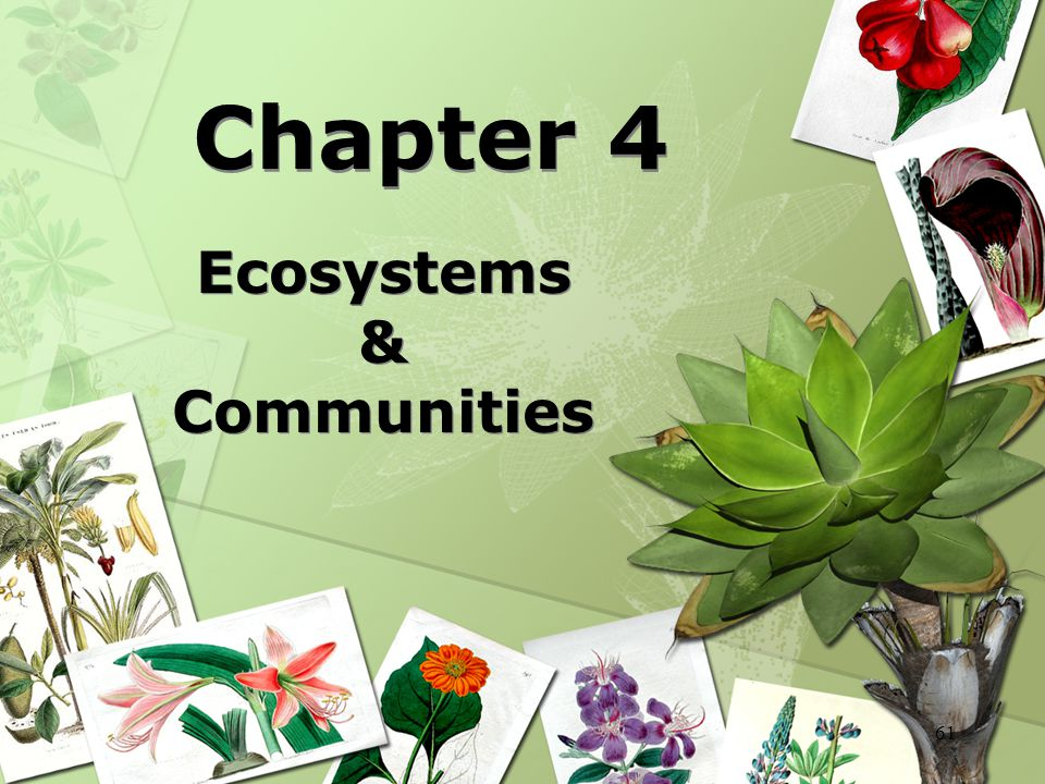 Ecosystems & Communities
