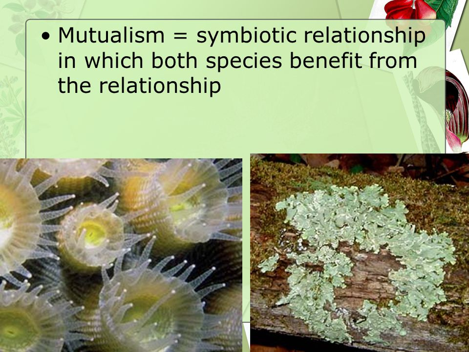 Mutualism = symbiotic relationship in which both species benefit from the relationship