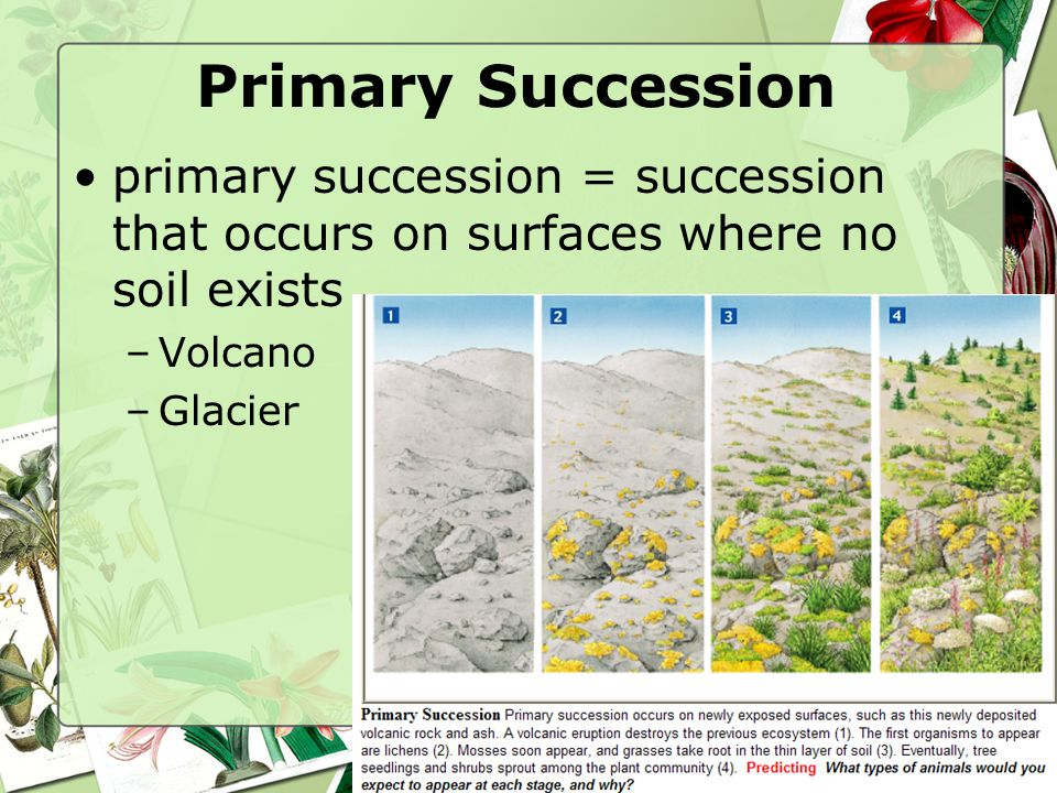 Primary Succession primary succession = succession that occurs on surfaces where no soil exists. Volcano.