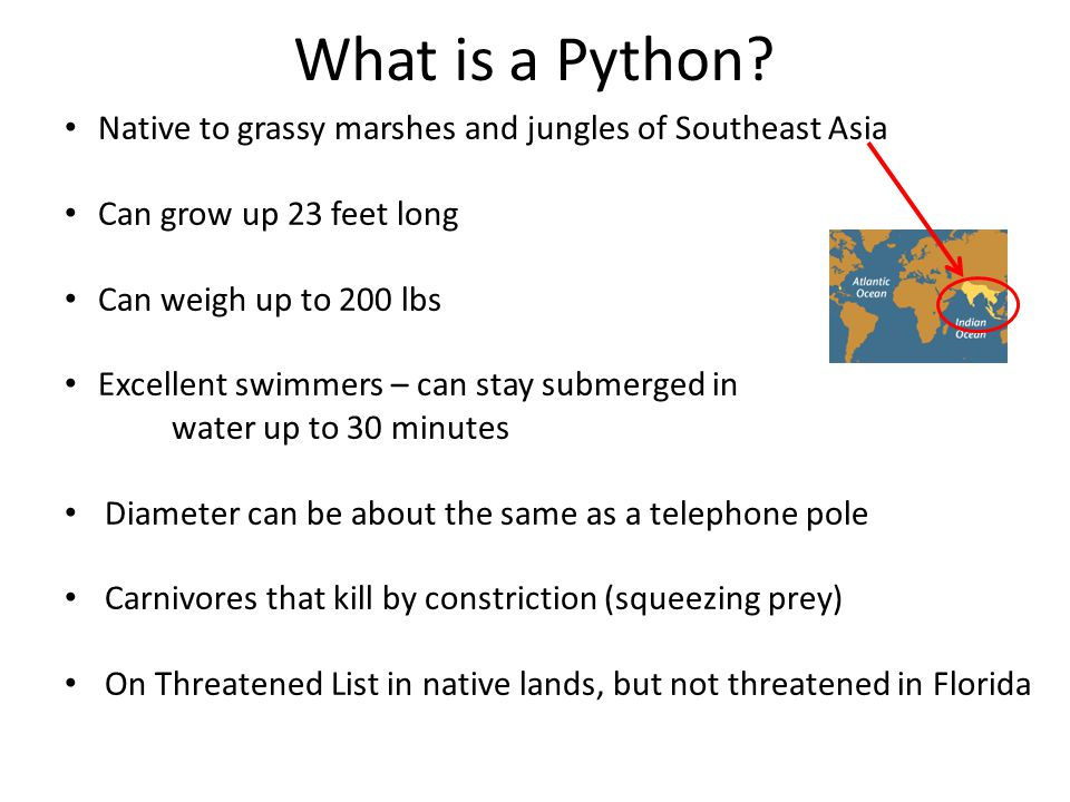 What is a Python Native to grassy marshes and jungles of Southeast Asia. Can grow up 23 feet long.