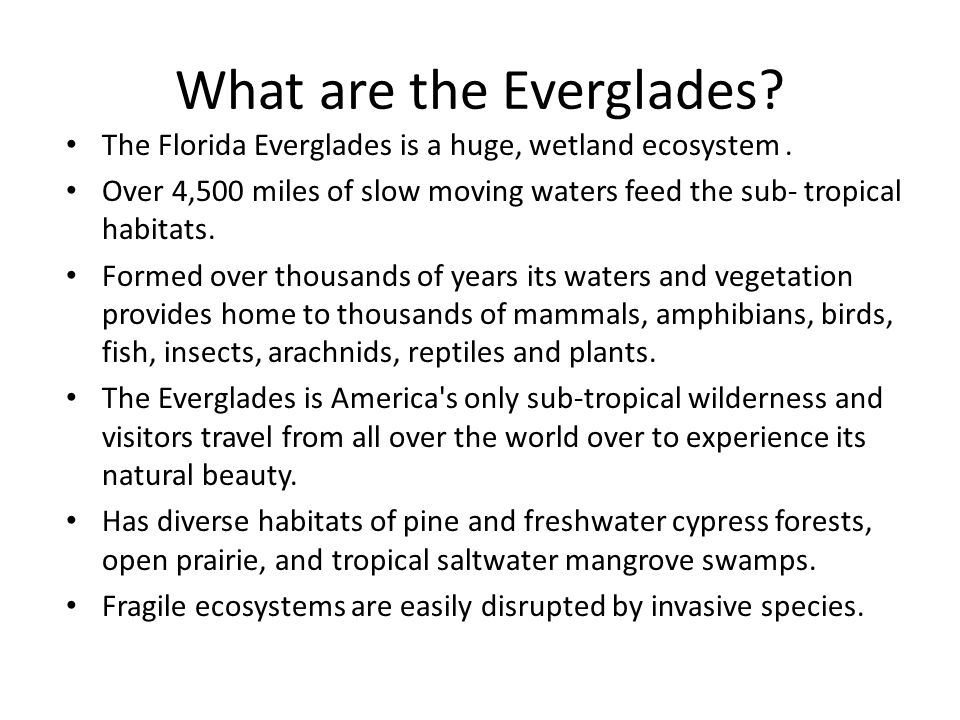 What are the Everglades