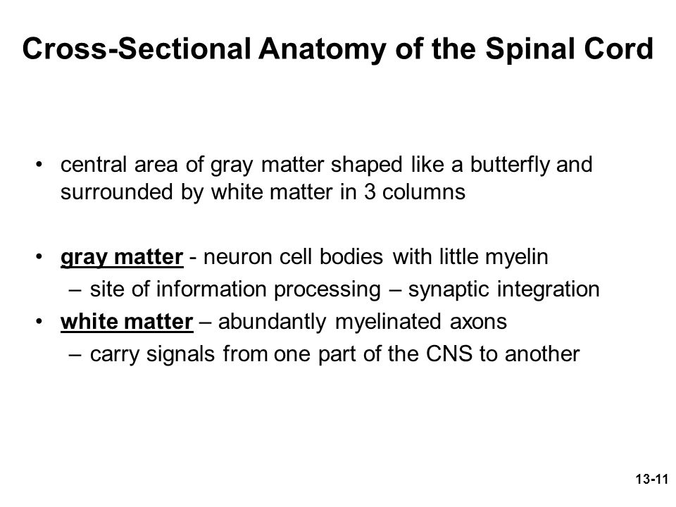 Cross-Sectional Anatomy of the Spinal Cord