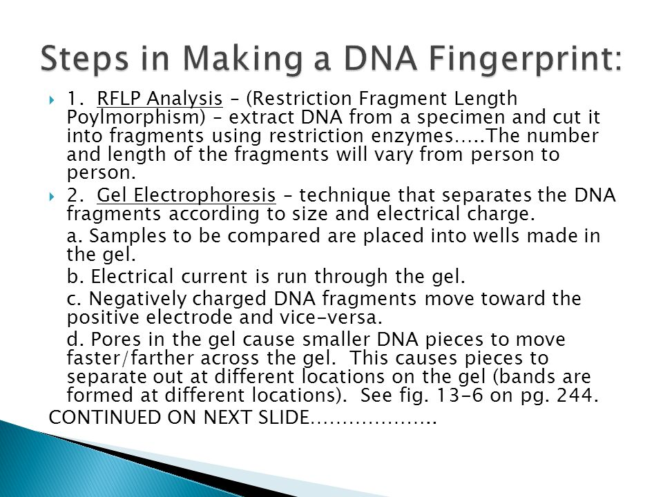 Steps in Making a DNA Fingerprint: