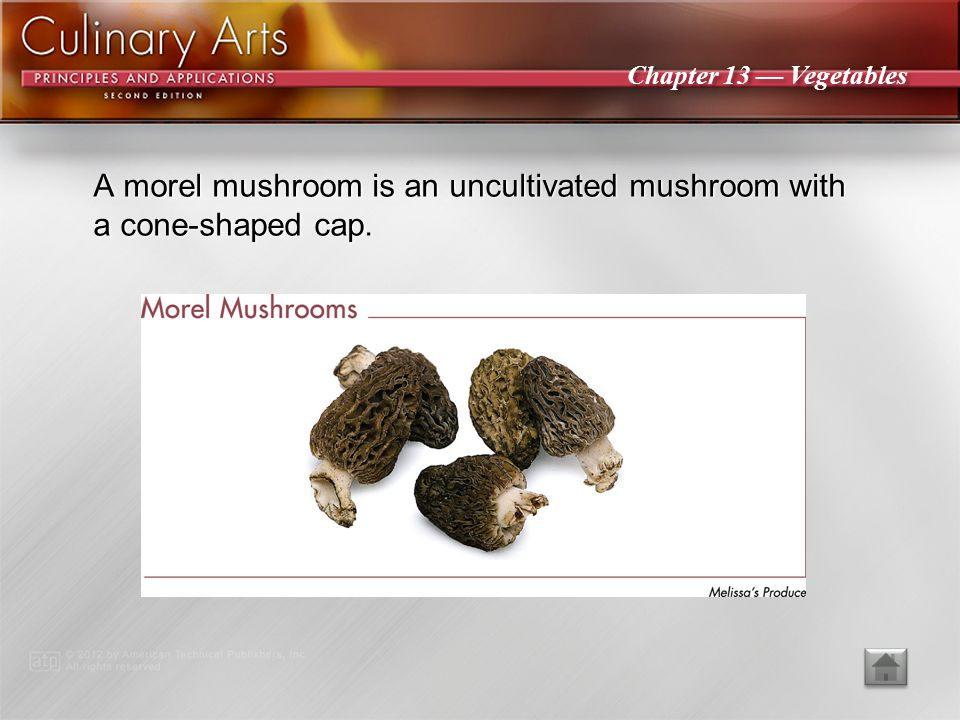 A morel mushroom is an uncultivated mushroom with a cone-shaped cap.