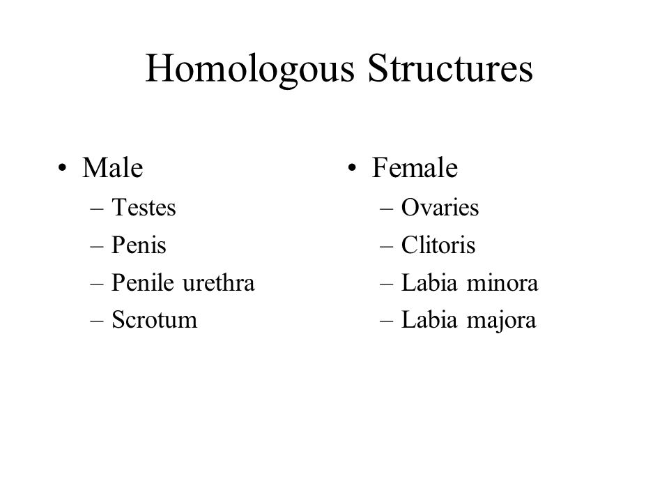 Homologous Structures