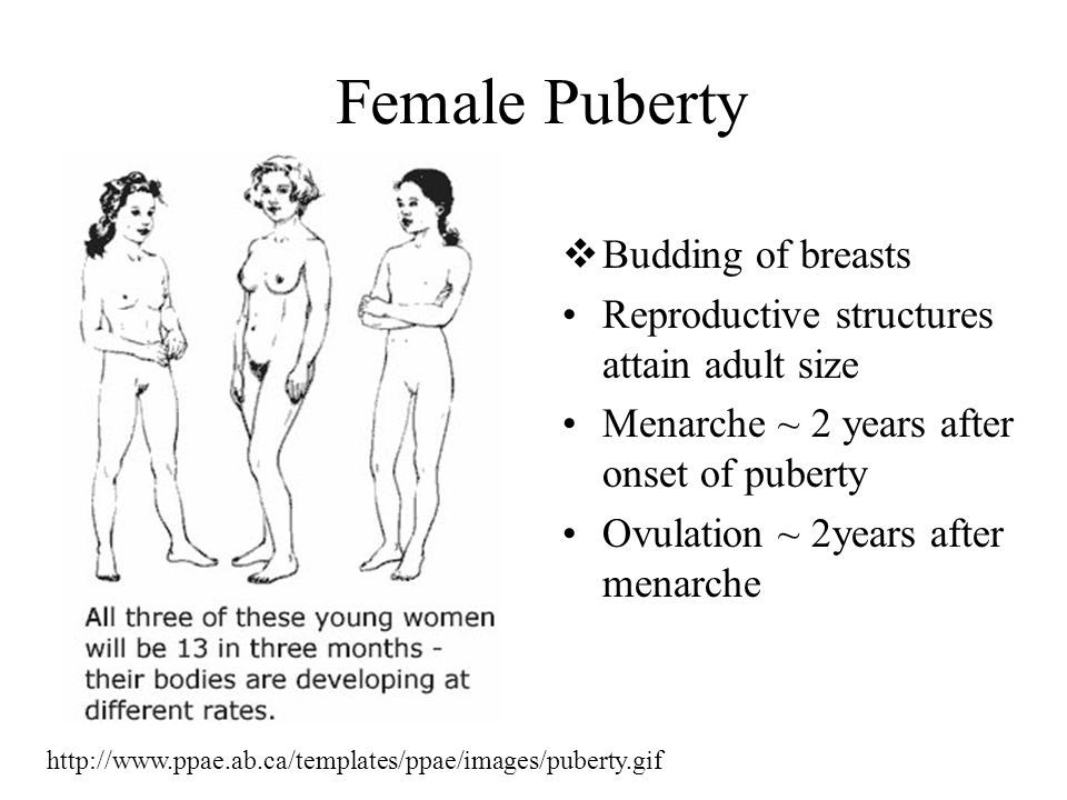 Female Puberty Budding of breasts