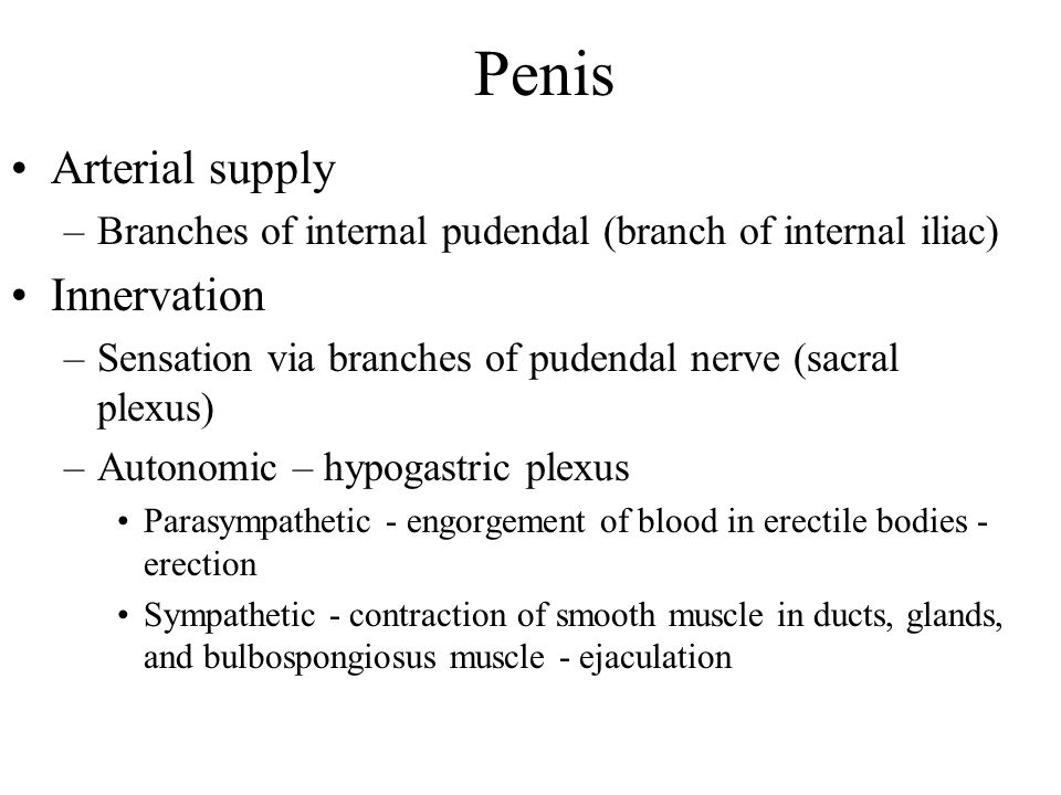 Penis Arterial supply Innervation