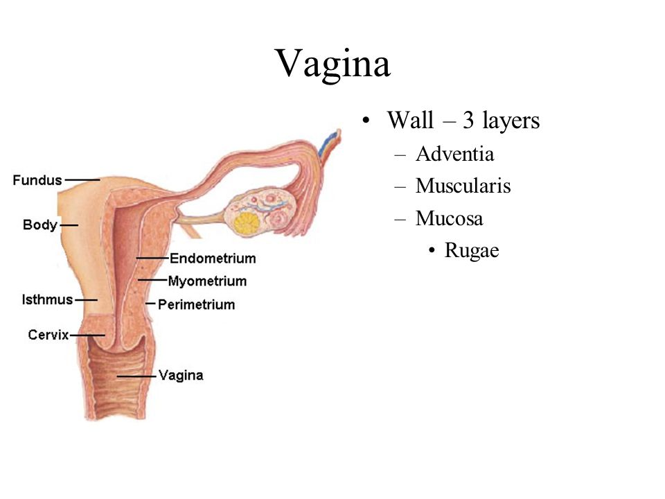 Vagina Health Panel TheVisualMD