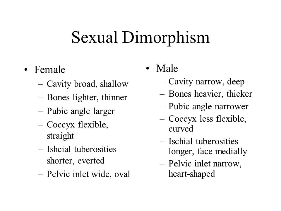 Sexual Dimorphism Female Male Cavity broad, shallow