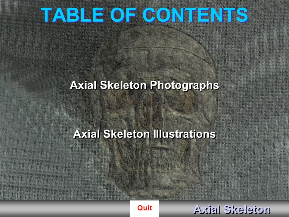 Axial Skeleton Photographs Axial Skeleton Illustrations