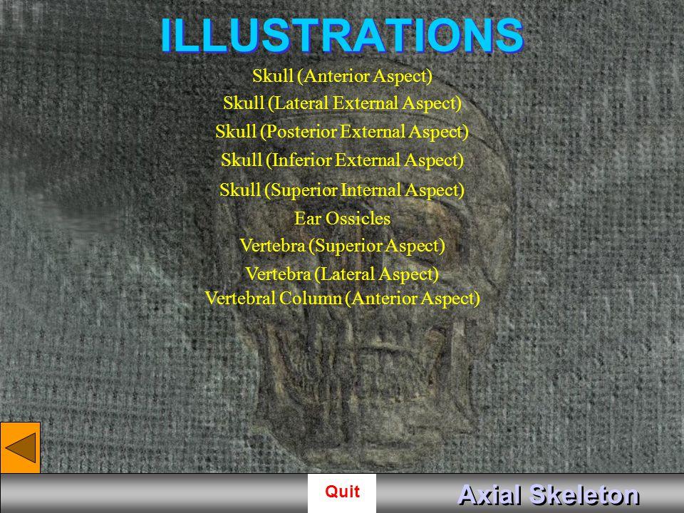 ILLUSTRATIONS Axial Skeleton Skull (Anterior Aspect)