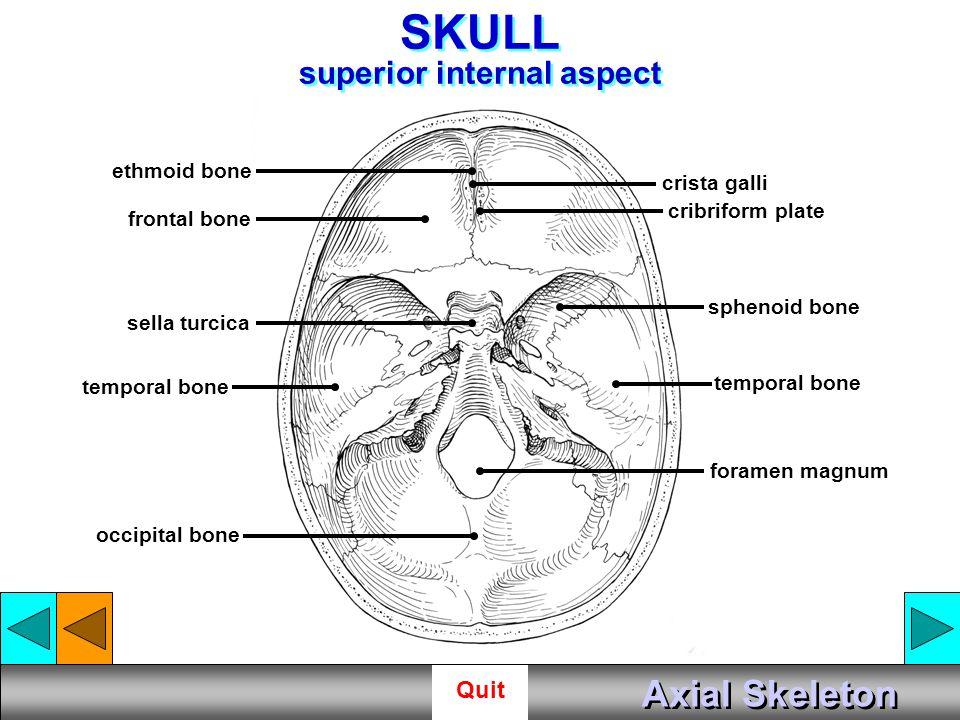 SKULL superior internal aspect
