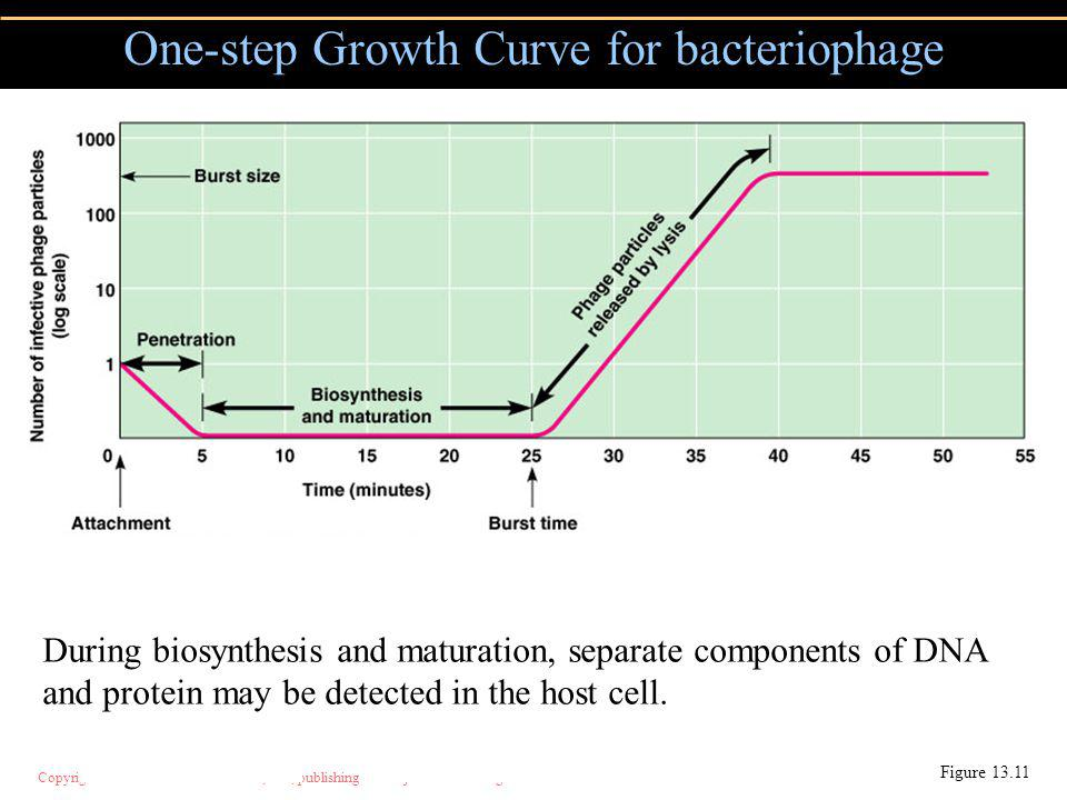 One-step Growth Curve for bacteriophage