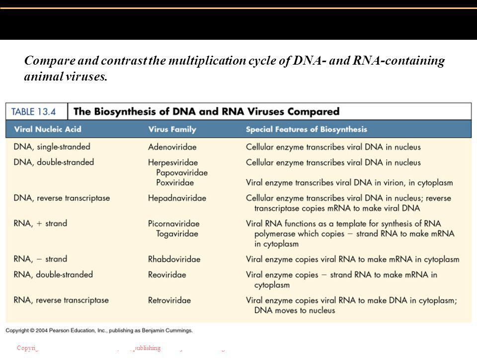 Compare and contrast the multiplication cycle of DNA- and RNA-containing animal viruses.