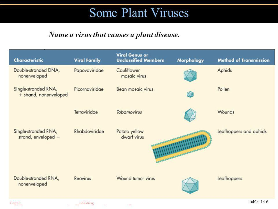 Some Plant Viruses Name a virus that causes a plant disease.