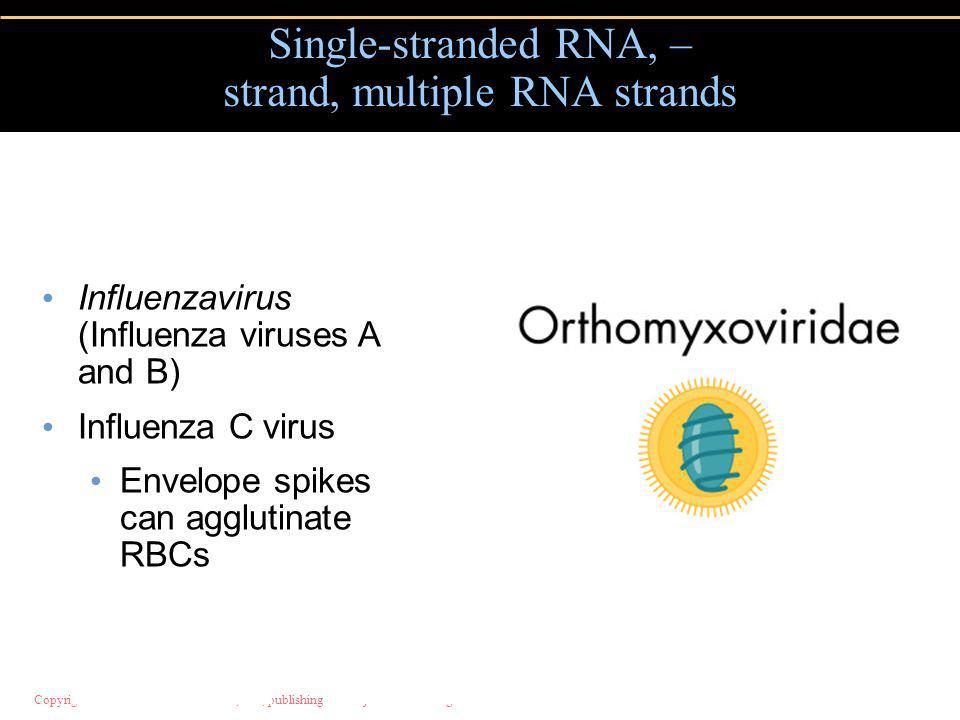 Single-stranded RNA, – strand, multiple RNA strands