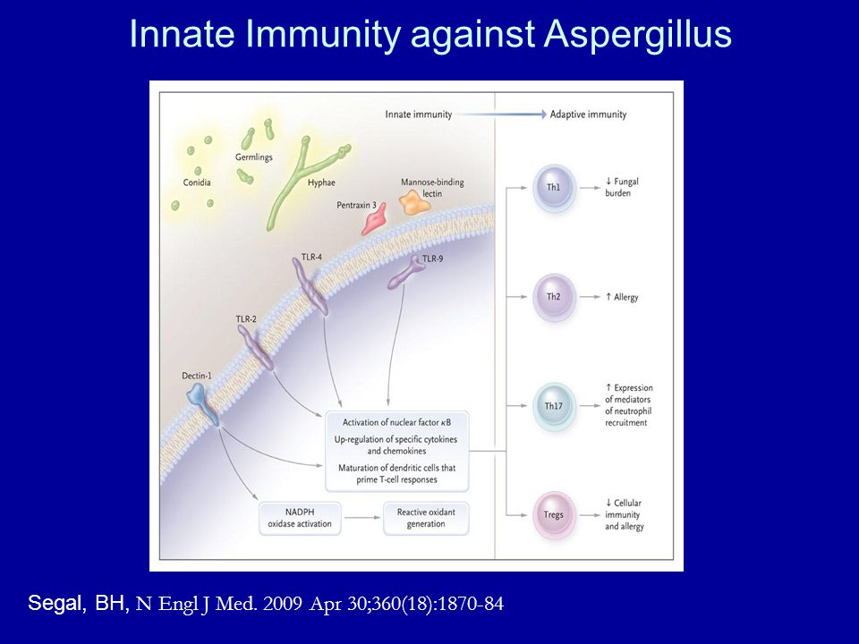 Innate Immunity against Aspergillus