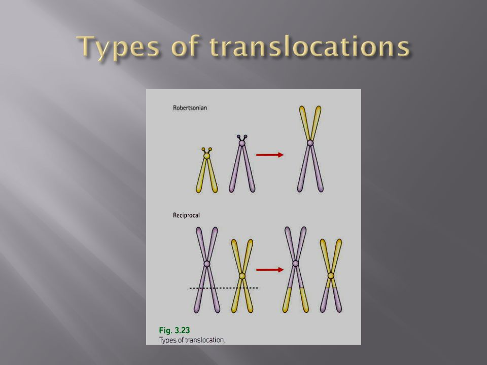 Types of translocations