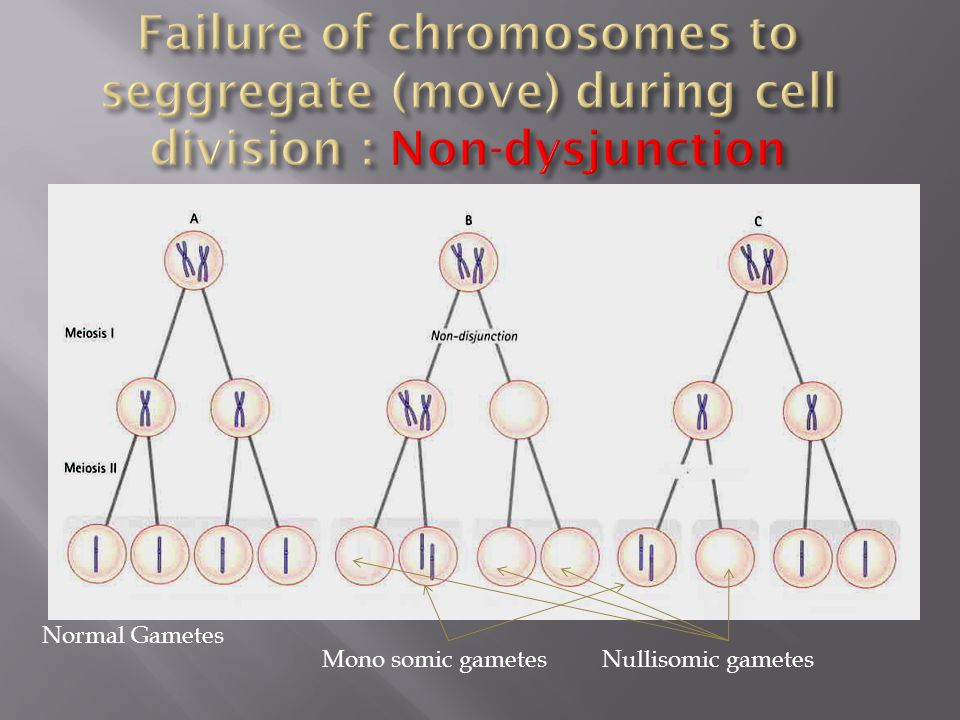 Failure of chromosomes to seggregate (move) during cell division : Non-dysjunction