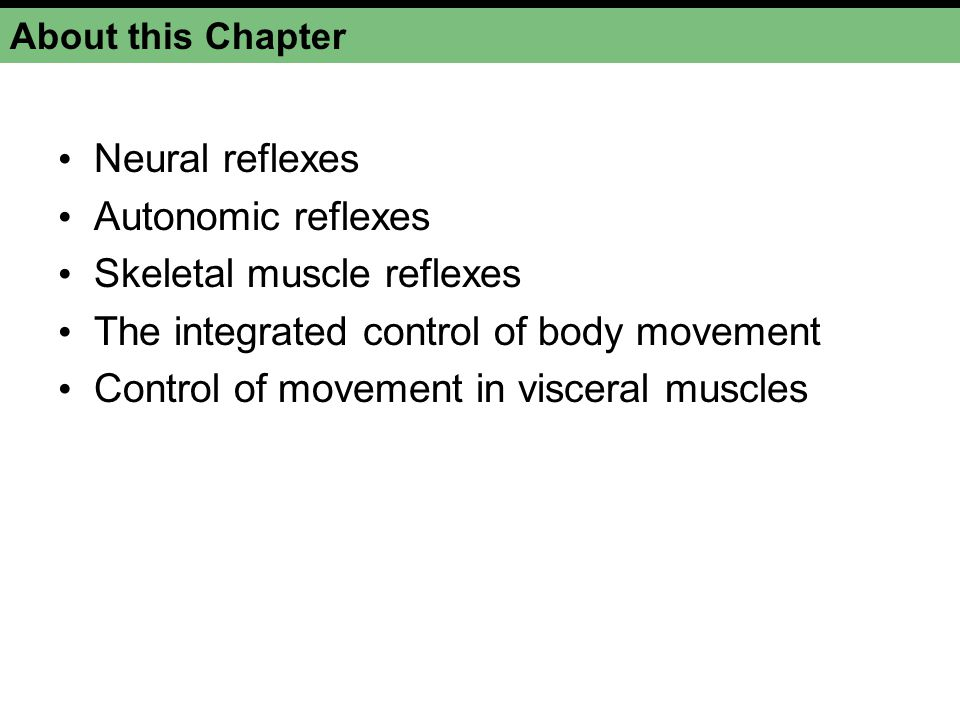 Skeletal muscle reflexes The integrated control of body movement