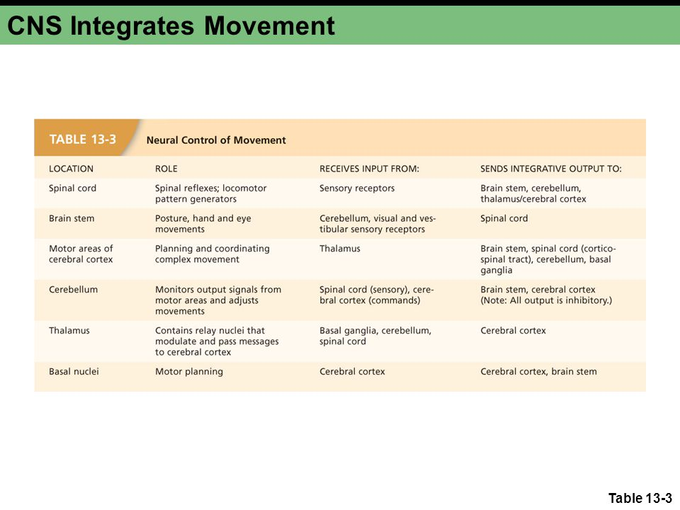 CNS Integrates Movement
