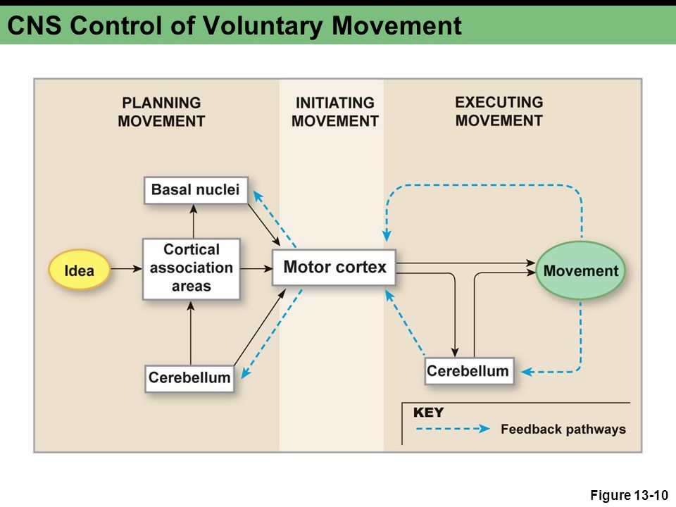 Control Body Movement Related Keywords & Suggestions - Control Body