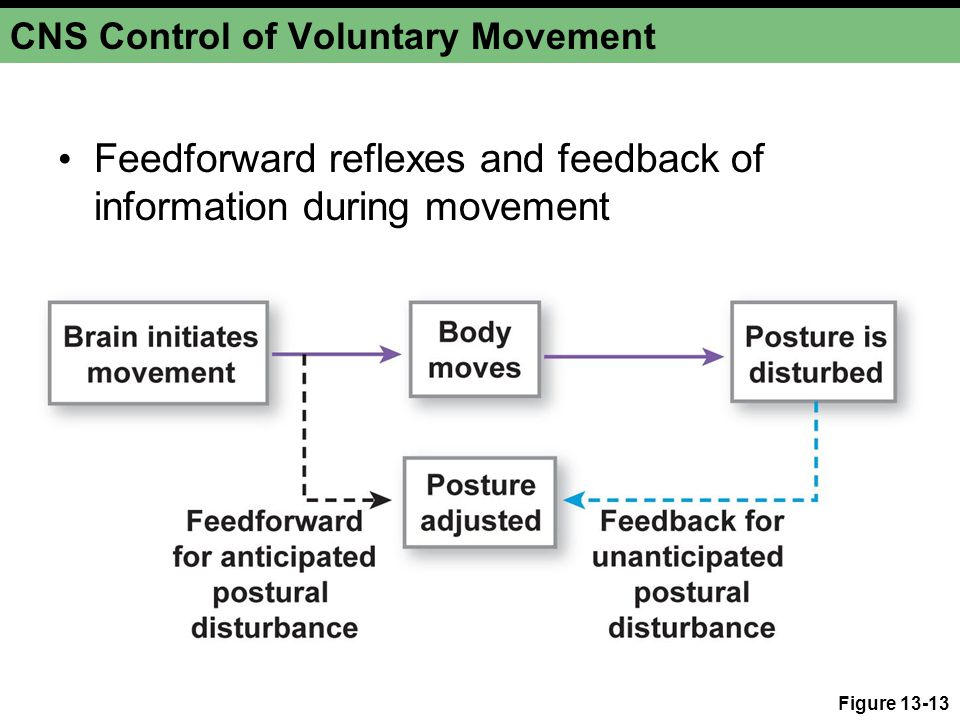 CNS Control of Voluntary Movement