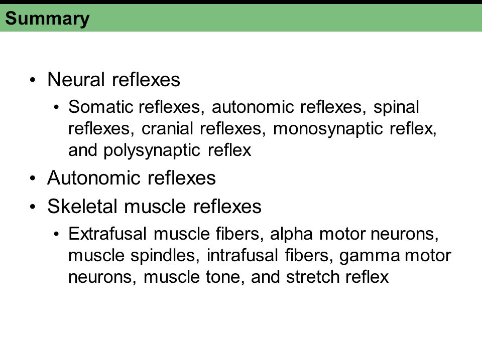 Skeletal muscle reflexes