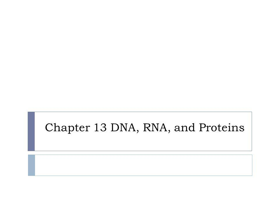 Chapter 13 DNA, RNA, and Proteins