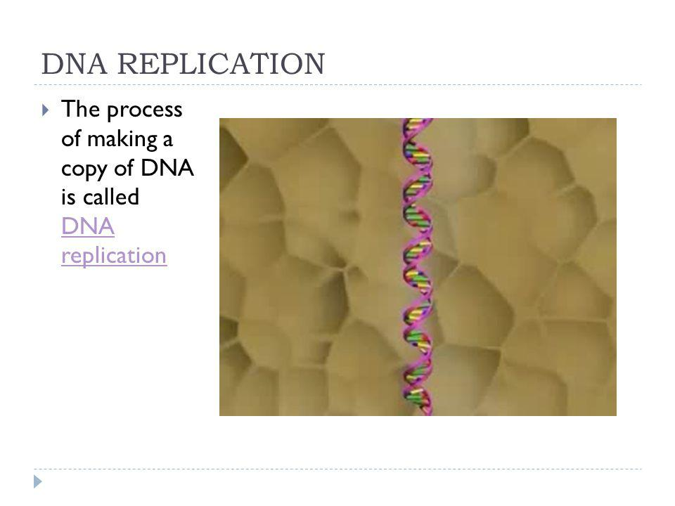 DNA REPLICATION The process of making a copy of DNA is called DNA replication