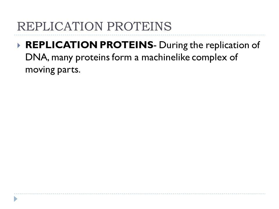 REPLICATION PROTEINS REPLICATION PROTEINS- During the replication of DNA, many proteins form a machinelike complex of moving parts.
