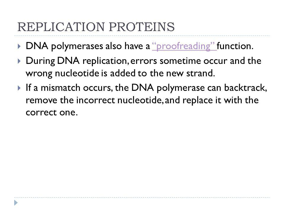 REPLICATION PROTEINS DNA polymerases also have a proofreading function.