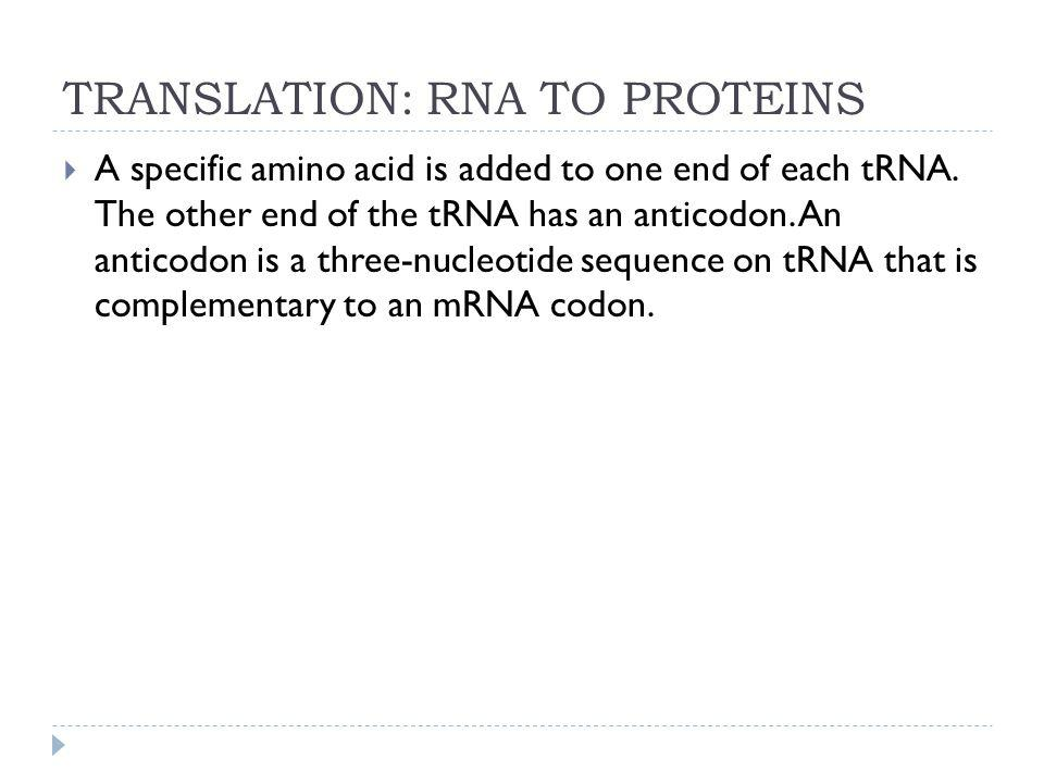 TRANSLATION: RNA TO PROTEINS