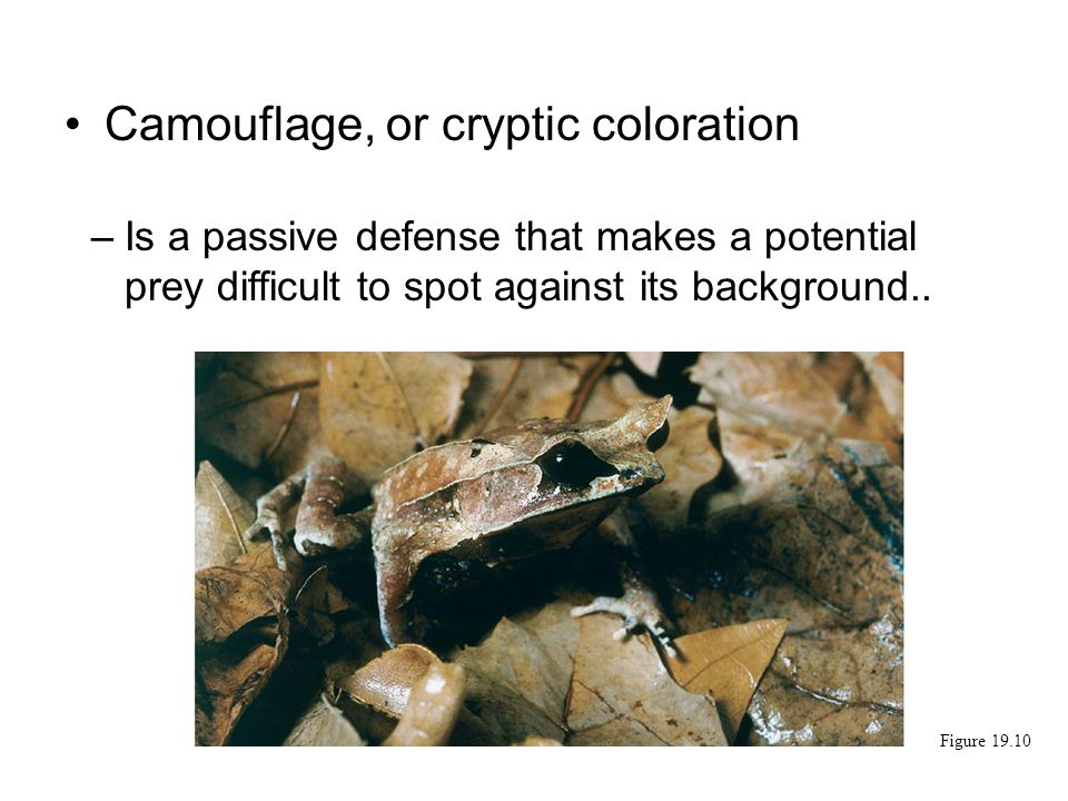 Camouflage, or cryptic coloration