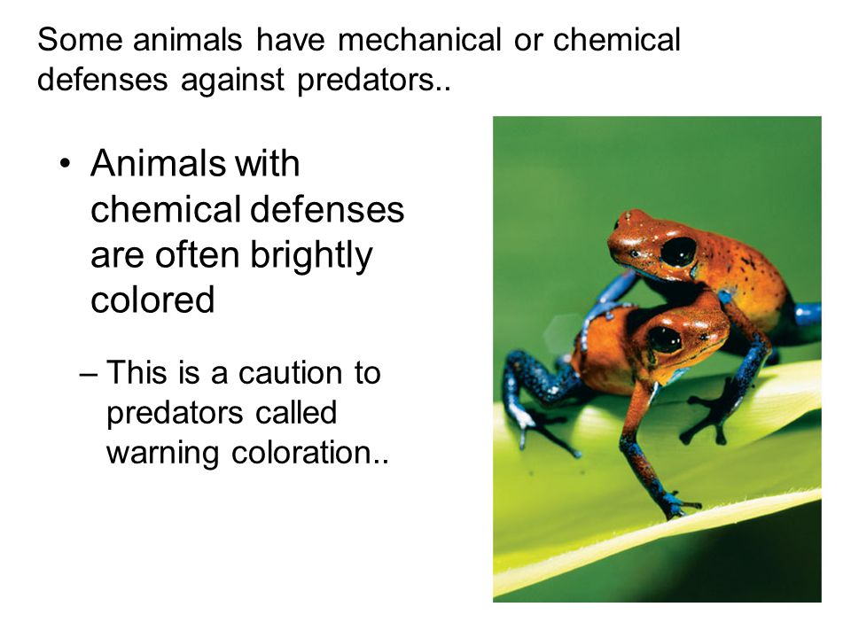 Animals with chemical defenses are often brightly colored