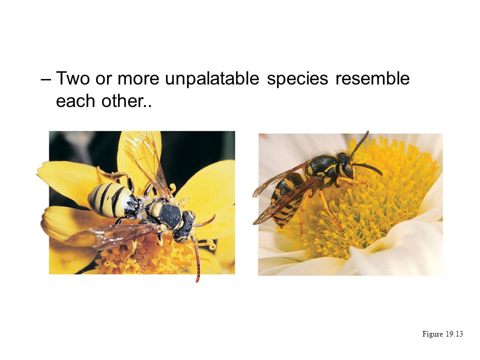 Two or more unpalatable species resemble each other..