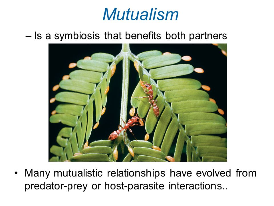 Mutualism Is a symbiosis that benefits both partners
