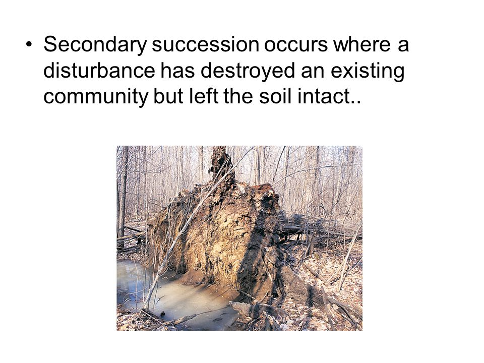 Secondary succession occurs where a disturbance has destroyed an existing community but left the soil intact..
