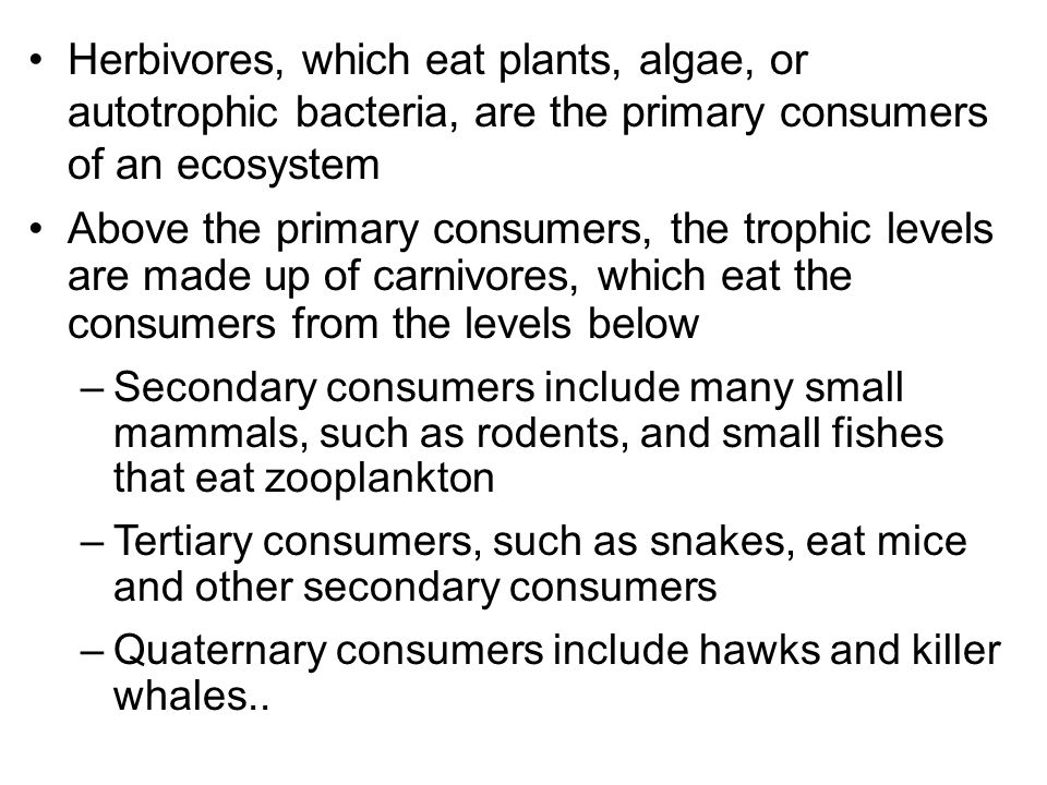 Herbivores, which eat plants, algae, or autotrophic bacteria, are the primary consumers of an ecosystem