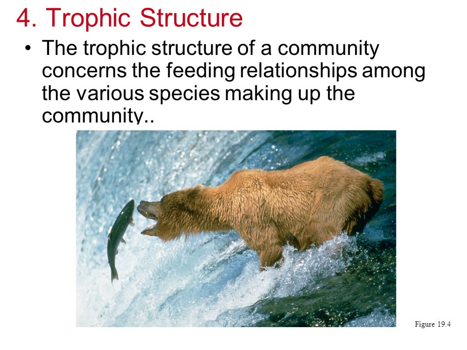 Trophic Structure The trophic structure of a community concerns the feeding relationships among the various species making up the community..