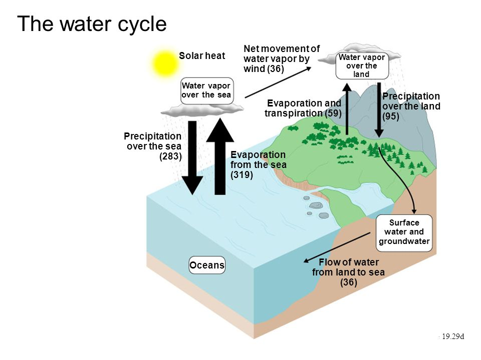 The water cycle Net movement of water vapor by wind (36) Solar heat