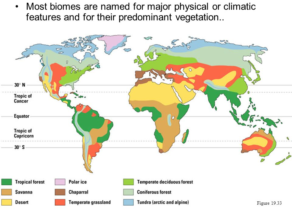 Most biomes are named for major physical or climatic features and for their predominant vegetation..