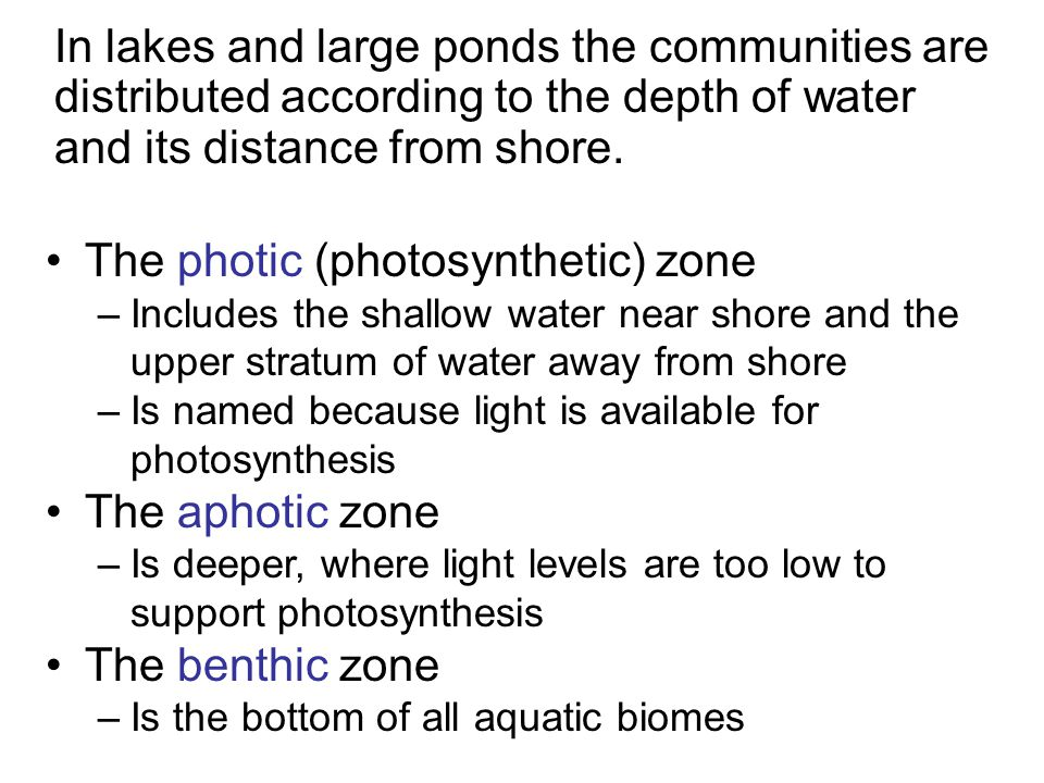 The photic (photosynthetic) zone