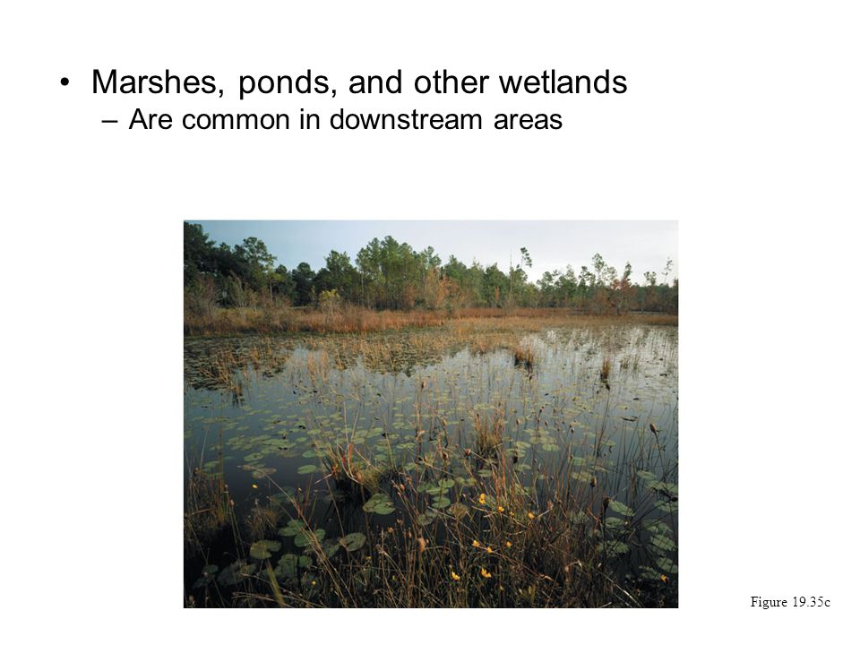 Marshes, ponds, and other wetlands