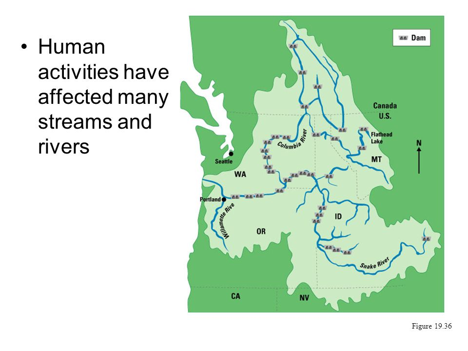 Human activities have affected many streams and rivers