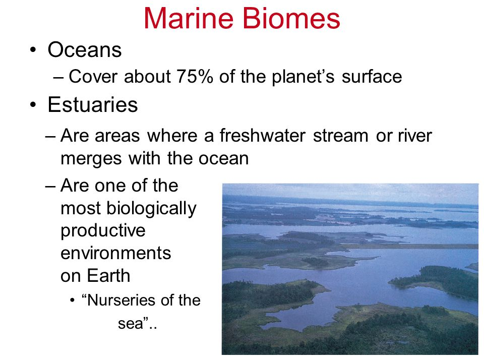 Marine Biomes Oceans Estuaries Cover about 75% of the planet's surface