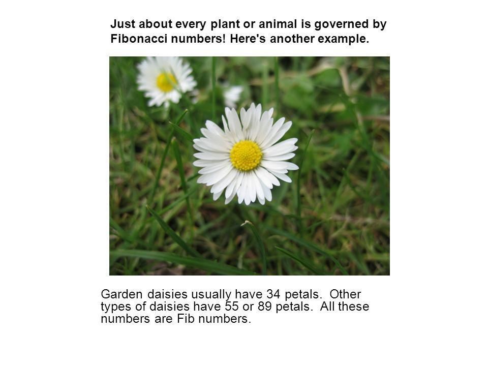 Just about every plant or animal is governed by Fibonacci numbers